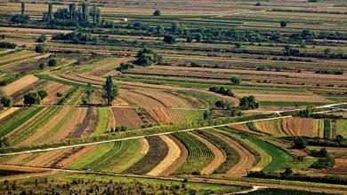 Photo of Grad Sinj donio odluku o dodjeli potpora u poljoprivredi