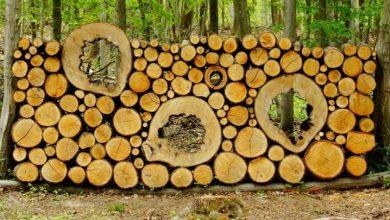 """Photo of Što se događa """"z drvima""""? Cijene su odletjele u nebo."""