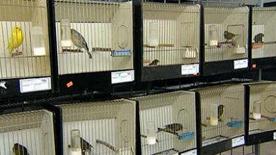 Photo of Udruga 'Dalmatia' organizira izložbu ptica