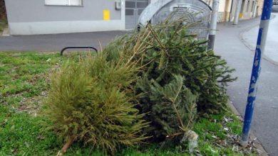 Photo of Kamo s božićnim drvcem?