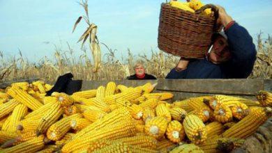 Photo of Javni natječaj za zakup državnog poljoprivrednog zemljišta