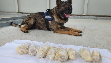 Photo of Policijski službenici uz pomoć psa Wolfa pronašli više od kilogram heroina