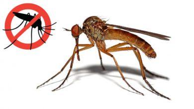 Photo of Večeras dezinsekcije komaraca s početkom u 2:00 sata